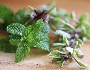 Mojito mint and Pesto Perpetuo Basil