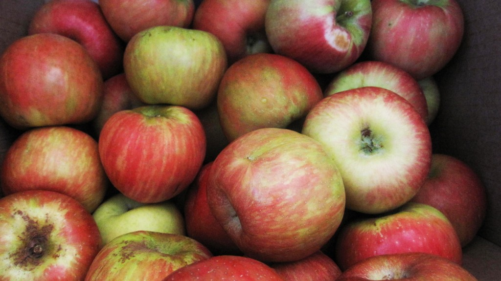 Pudwill Berry Farms Honey Crisp Apples2